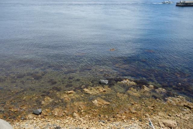 国営明石海峡公園バーベキュー広場の前の海の水質