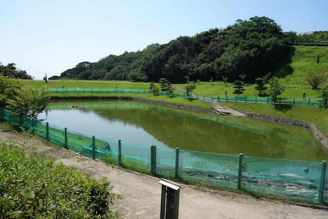 ウェルネスパーク五色わんぱく広場にある池